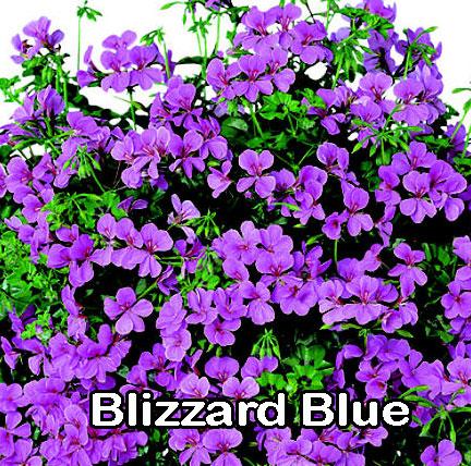 Blizzard Blue