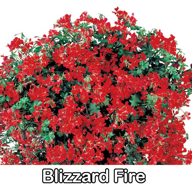 Blizzard Fire