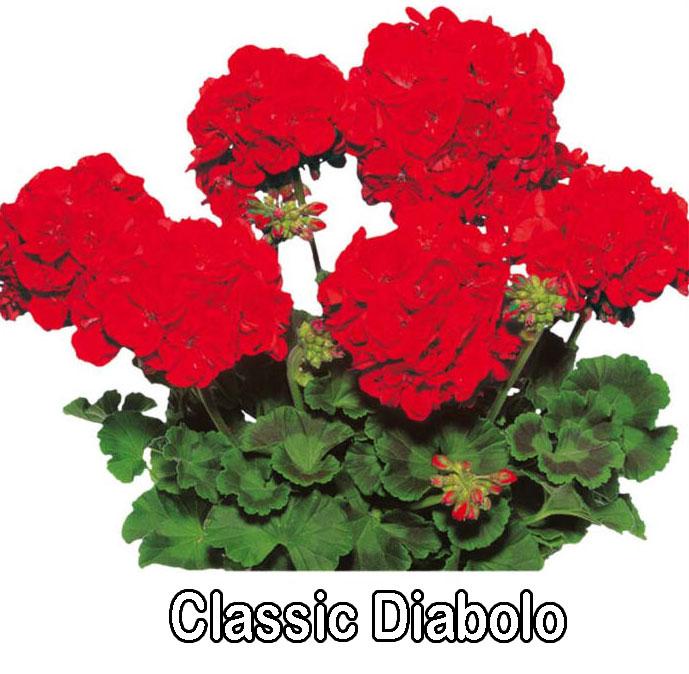 Classic Line Diablo