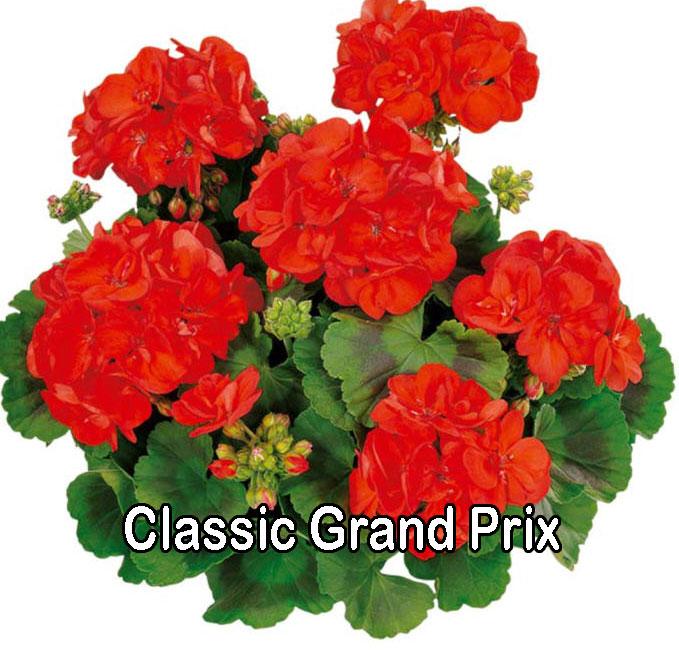 Classic Line Grand Prix