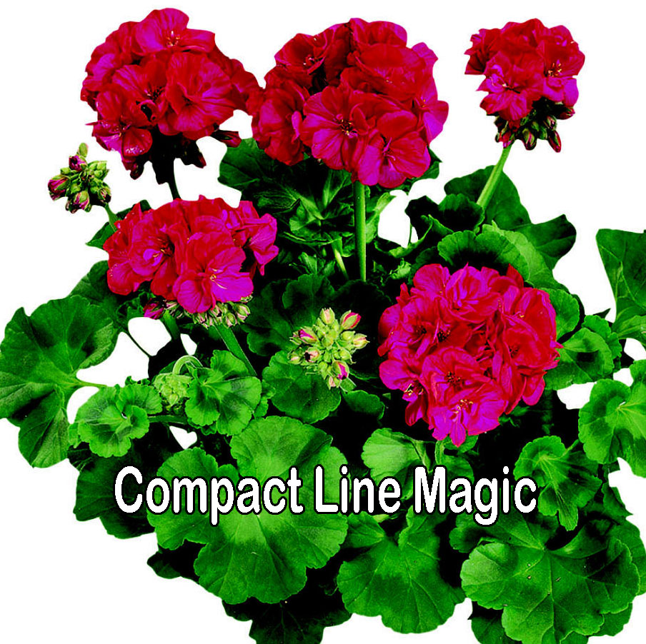 Compact Line Magic