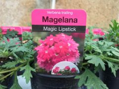 Magelana Magic Lipstick Trailing Verbena
