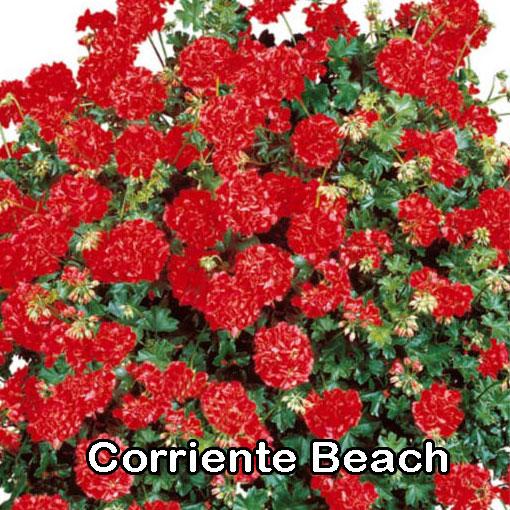 Corriente Beach