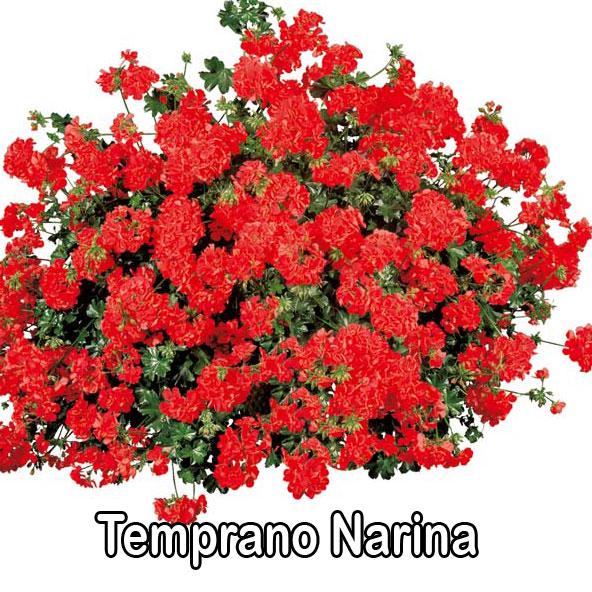 Temprano Narina