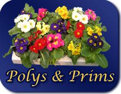 polys & prims